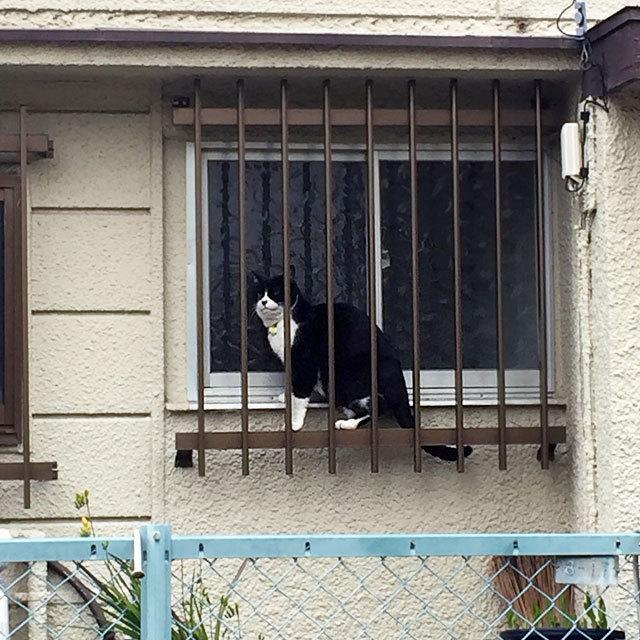 ネコ ねこ 猫 キャット ニャンコ