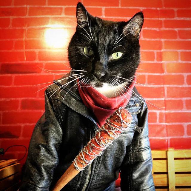 Cat Cosplay @cat_cosplay